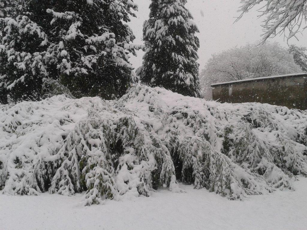 neigevizille26021402.jpg.3968fc86540285c