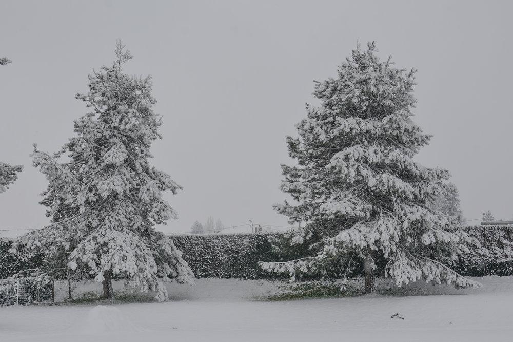 neige février 2018-7479.jpg