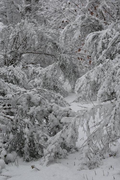 neige février 2018-7529.jpg