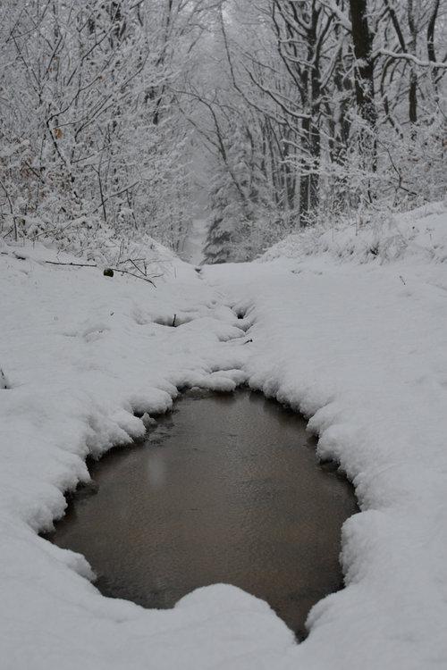 neige février 2018-7541.jpg