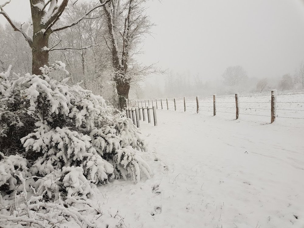 neige04.jpg