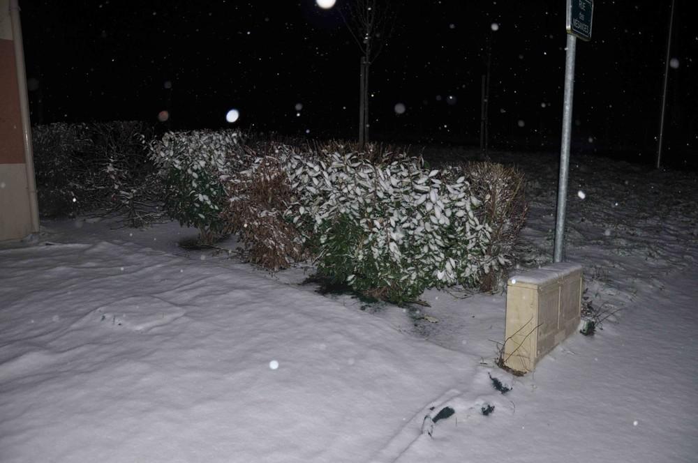neige st did.jpg