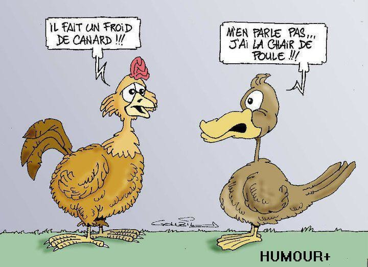 froid-de-canard-chair-de-poule1.jpg
