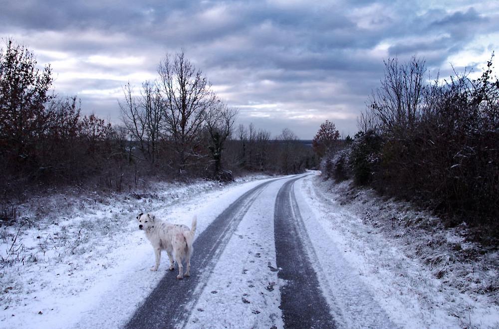 neige-20190124-4150-Dunlop-1024.thumb.jpg.8f4c572223b1126b15e8dc8293307156.jpg
