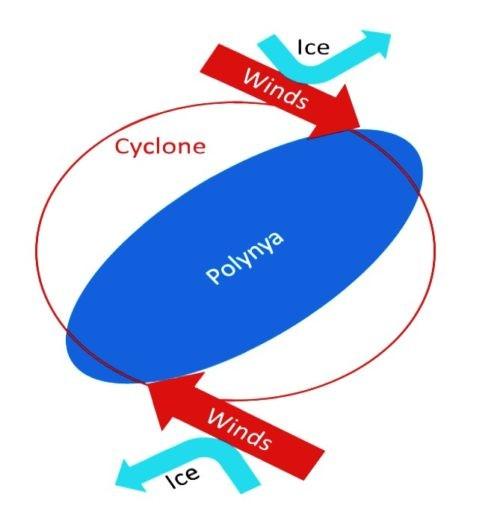 polynie-vent-e1556378056192.jpg.0ead334b660601fd636181a7cc7980aa.jpg