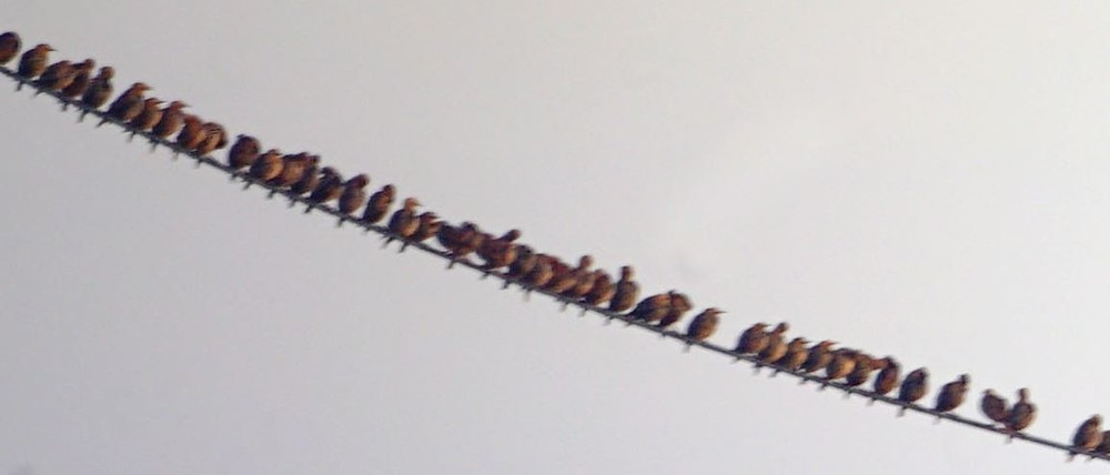 oiseaux.thumb.JPG.11eb290fc9b600cc33ade3e1170c32b0.JPG