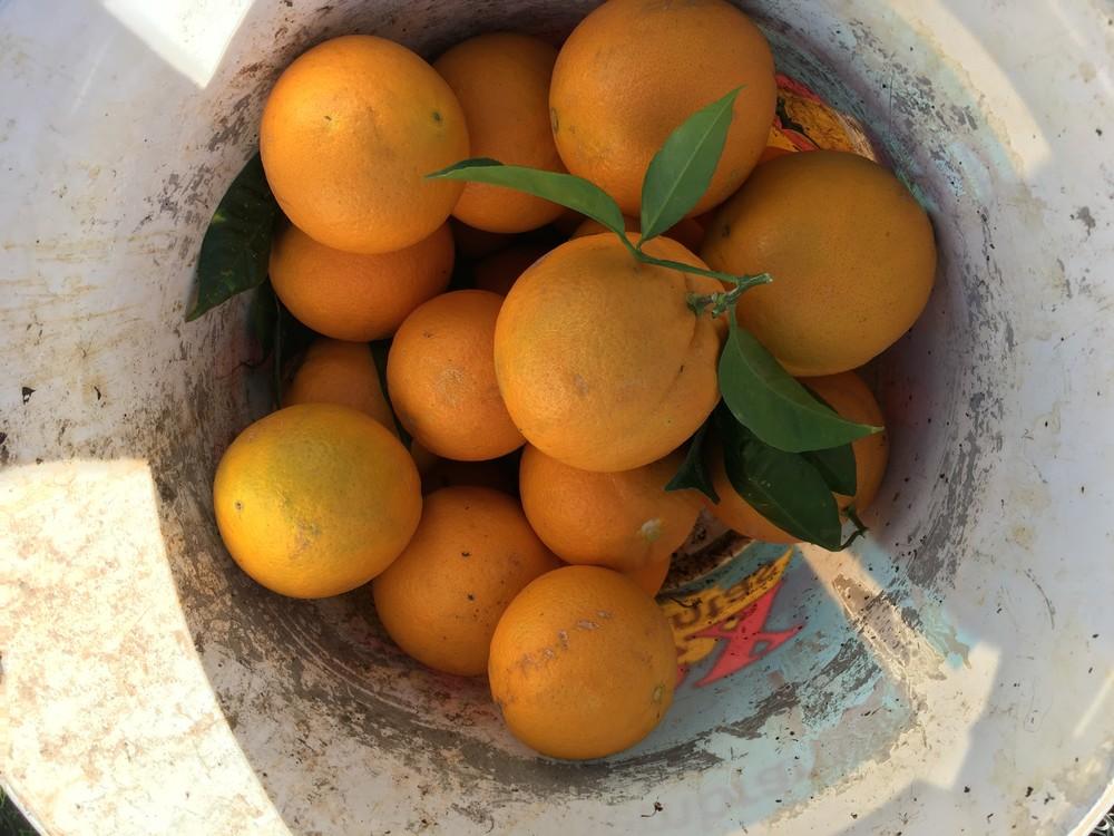 orange.thumb.jpg.3659c964c5cac982c2e34fbc3e17ee35.jpg
