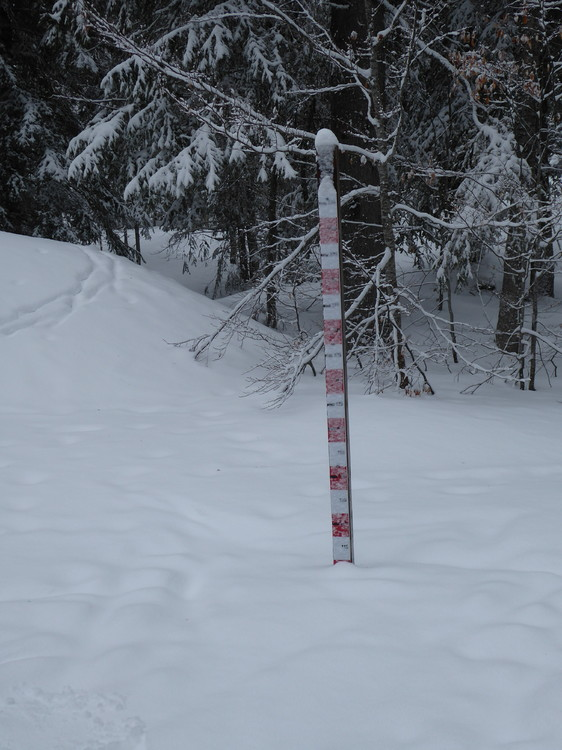 perche_neige_jura.thumb.JPG.a90ad2968b49c68e31d1327ab8ecb26d.JPG