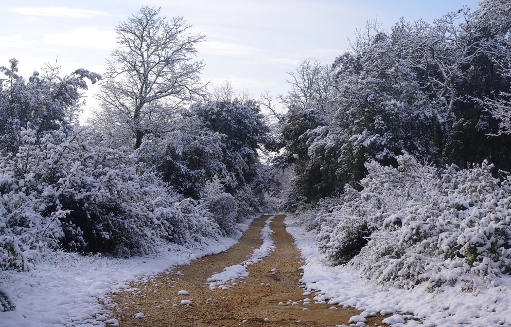 neige 4.png