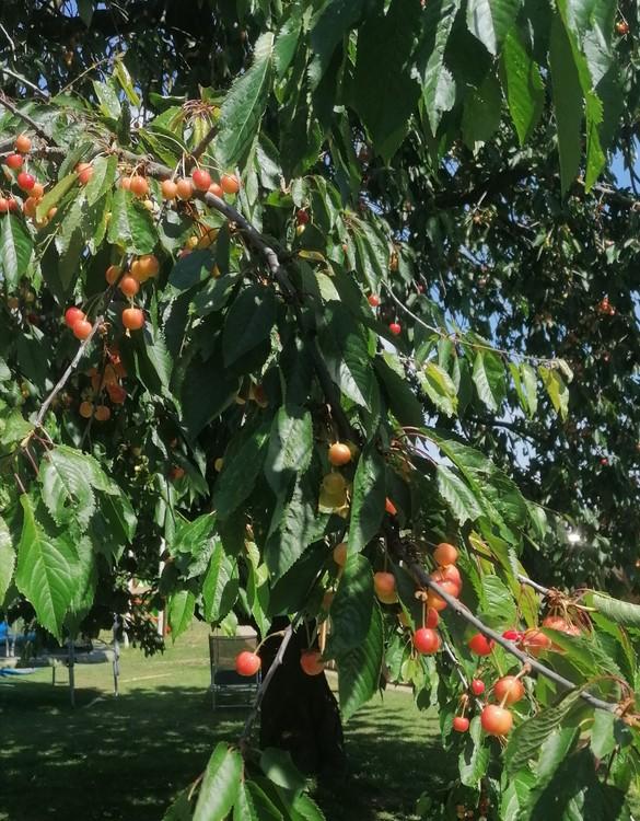 IMG_20200526_152936.thumb.jpg.da23e5083437c61ceae2eadf5c5f5a3c.jpg