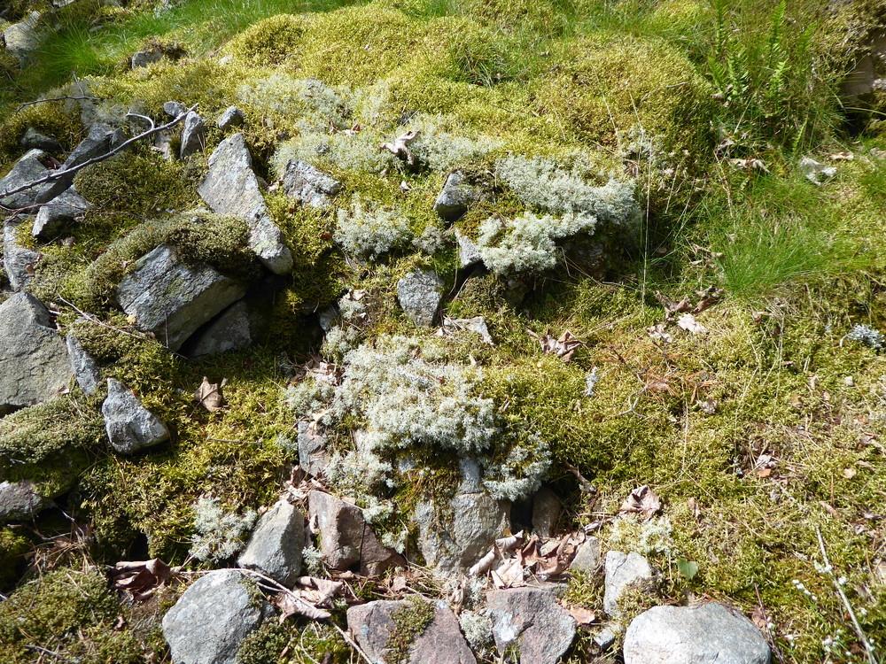 lichen.thumb.JPG.cf89be3d0743a317985c140f0ae30551.JPG