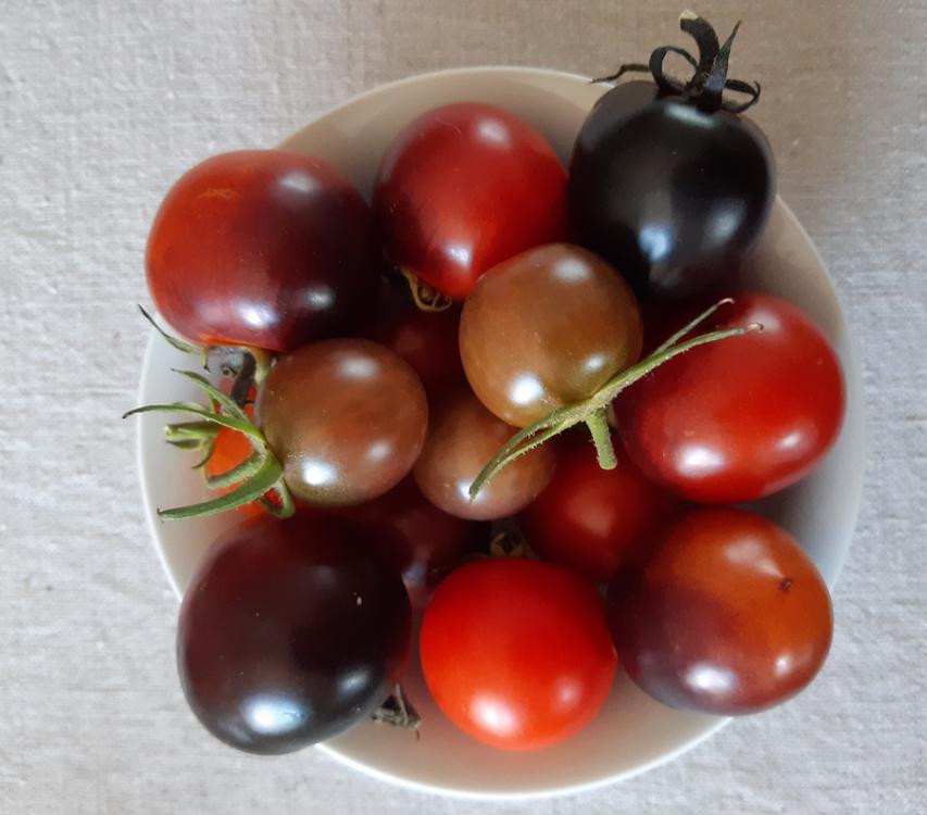 Tomates de couleur.png