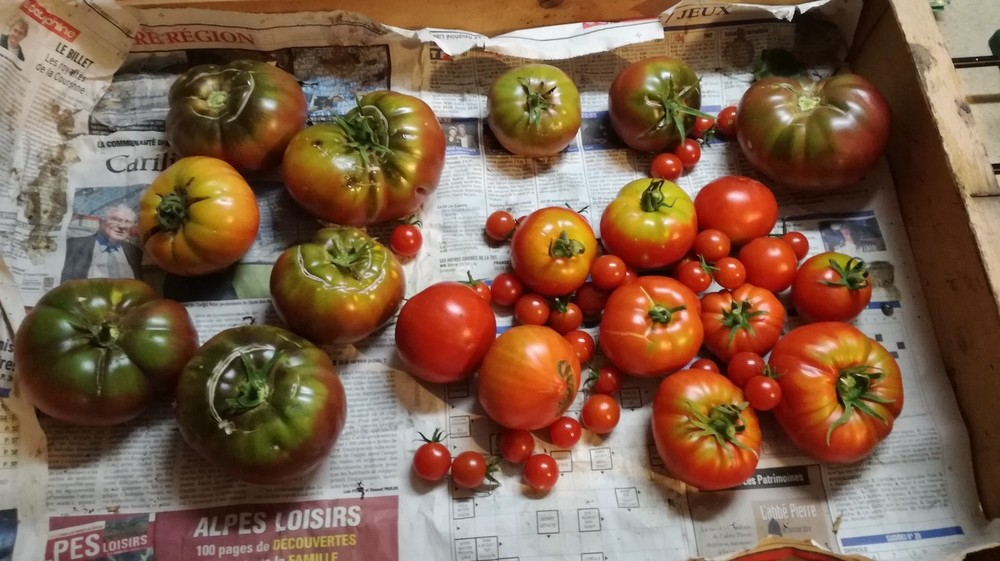 Tomates.thumb.jpg.f02441f1cea512c45166f2fd8a2c8e7f.jpg
