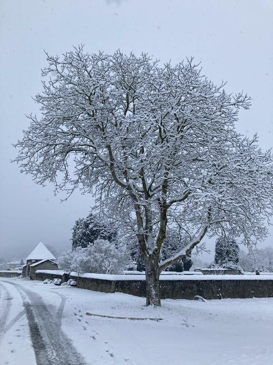 neige15.thumb.jpg.f21aaa3da043cceda2391183e583277e.jpg