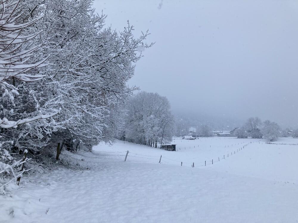 neige16.thumb.jpg.846db6d81546ac311053c9364471bc3f.jpg
