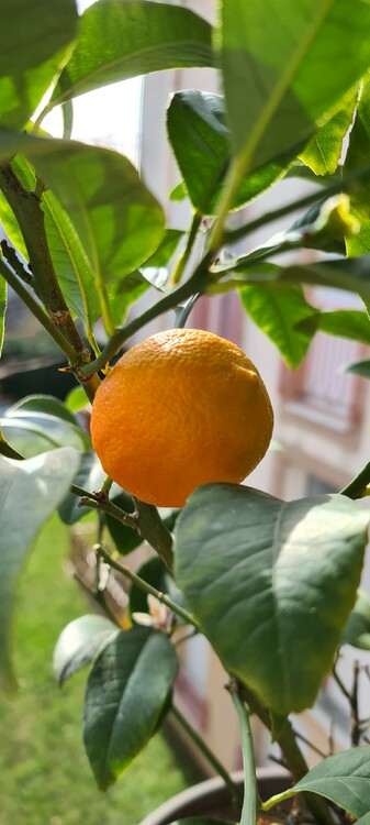 oranger 3 .jpg
